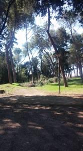 bolivar-alberi