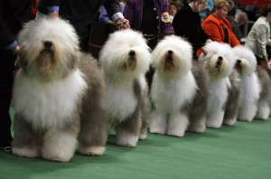 expo-cani