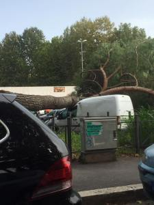 albero caduto 2