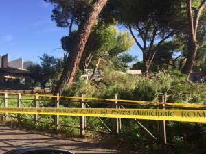 largo-pugliese-alberi